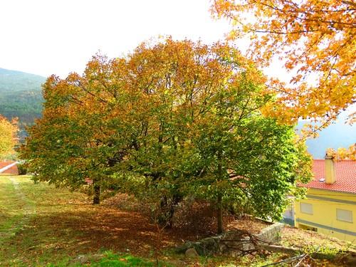 Fotos de Outono !!! 018.jpg