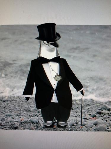 penguin_in_a_suit_by_hyruleanassassin-d8vtb30.jpg