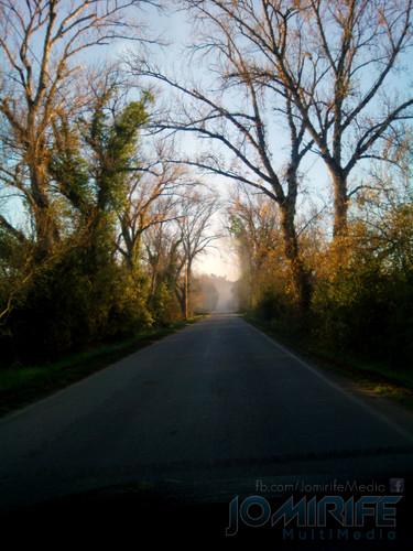 Estrada pela floresta com vegetação em volta [en] Road through the woods with vegetation around