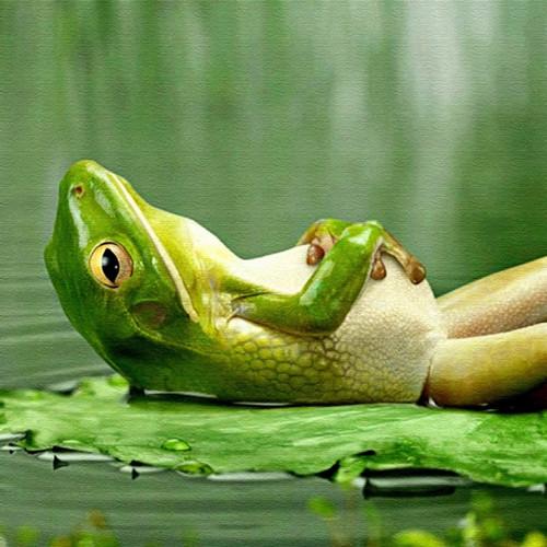fotos-de-sapos-meditando.jpg