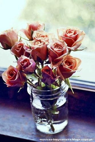 tendresse (Ternura) é quando alguém oferece flores