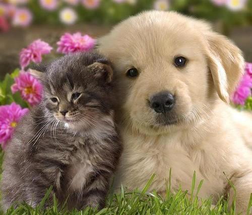 img_como_tratar_os_animais_com_homeopatia_15179_or