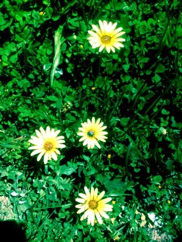 113_A3C_Super Yellow Girls.jpg