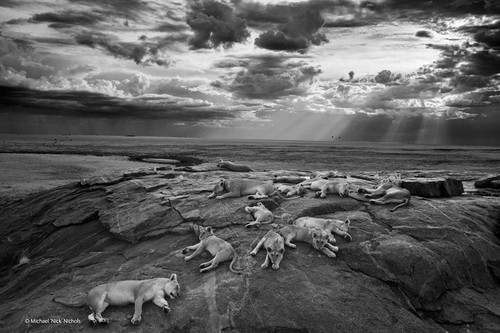 natural-history-museum-wildlife-photographer-of-th