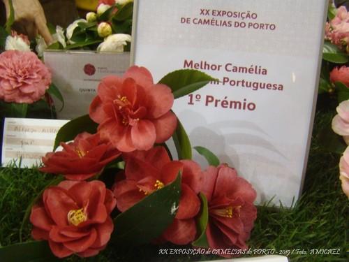 3 - XX Exposição de Camélias do Porto - 2015 -