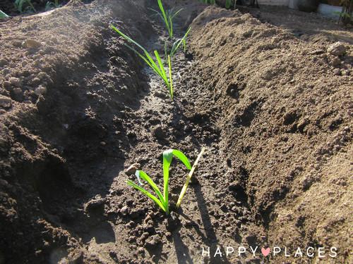 Agricultura1.1.jpg