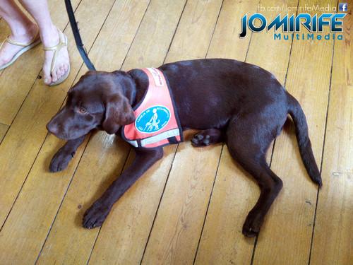 Cão Guia [en] Guide dog