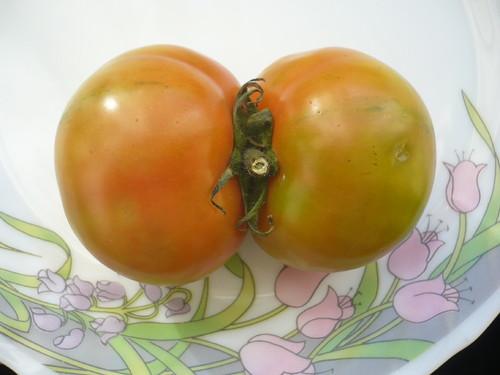 Par de tomates
