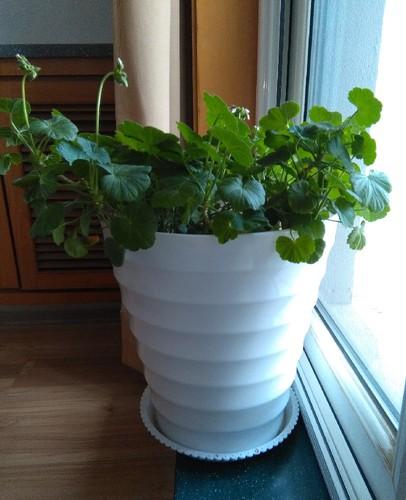 Planta3
