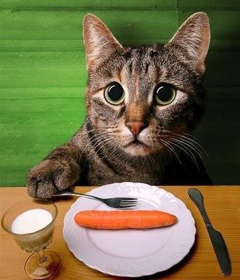 gato cenoura.jpg