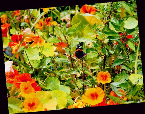 Primavera21052016blog.jpg