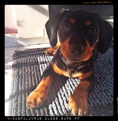 Cachorro novo - Maria das Palavras