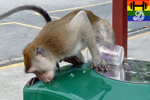 monkey recycling.jpg