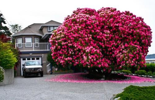77555-880-1447278239amazing-trees-7.jpg