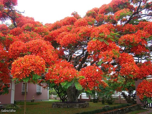 76905-880-1447278243amazing-trees-15.jpg