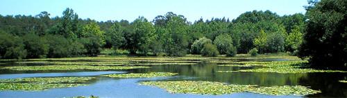 Lagoa dos Cedros ou do Charco