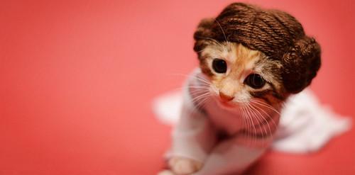 gatinha-princesa-leia.jpg