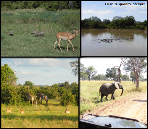 South Luangwa 2.png