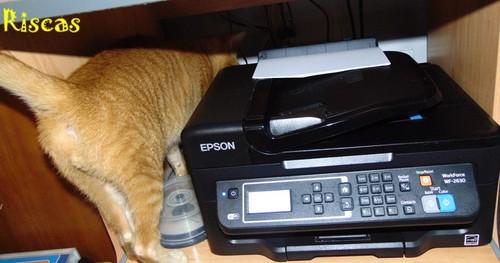 gatos-e-impressoras1.JPG