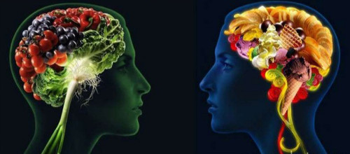 cerebro comida1.jpg