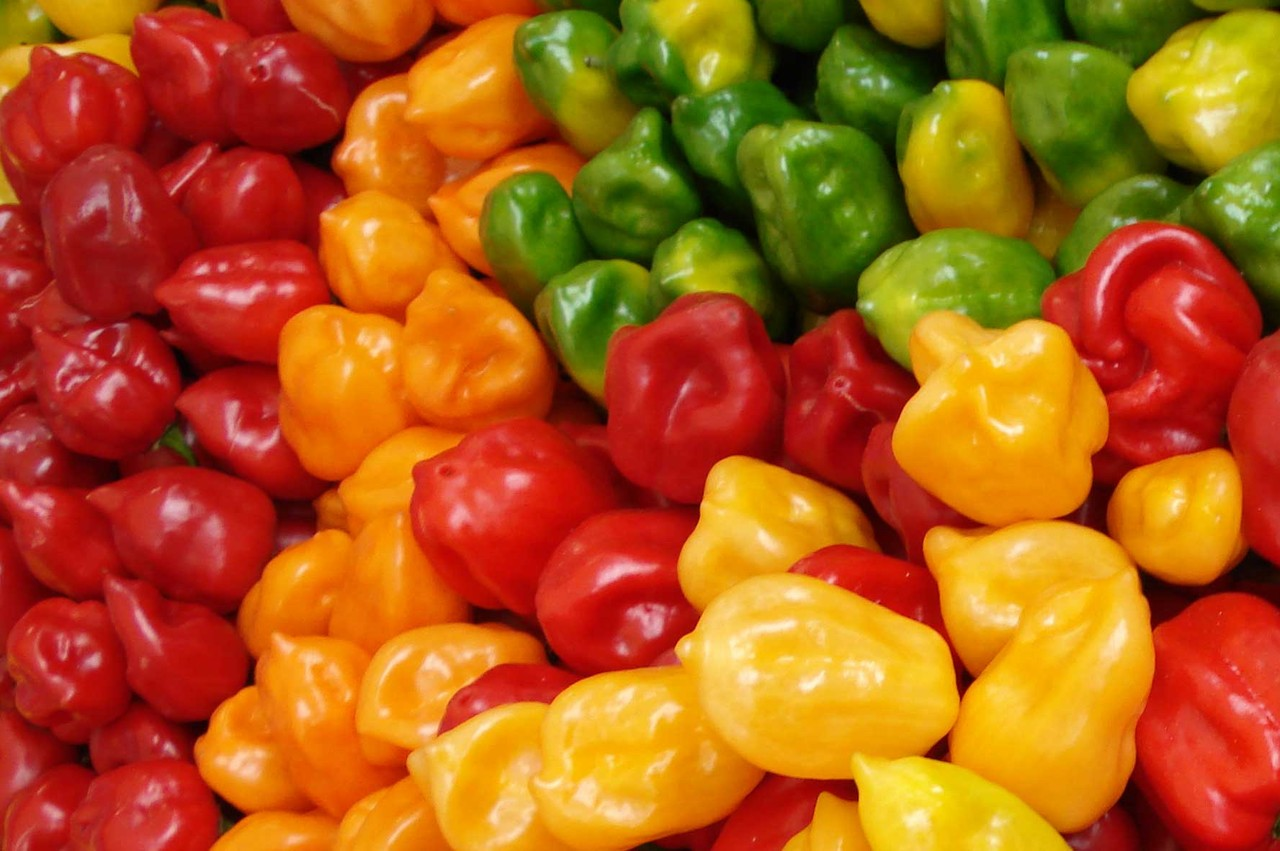 habanero-peppers-1.jpg