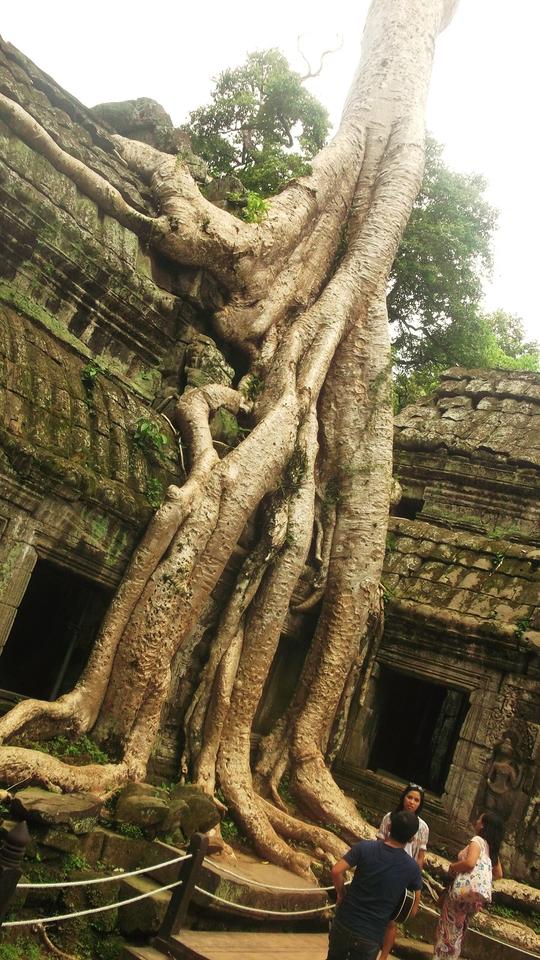 camboja.png
