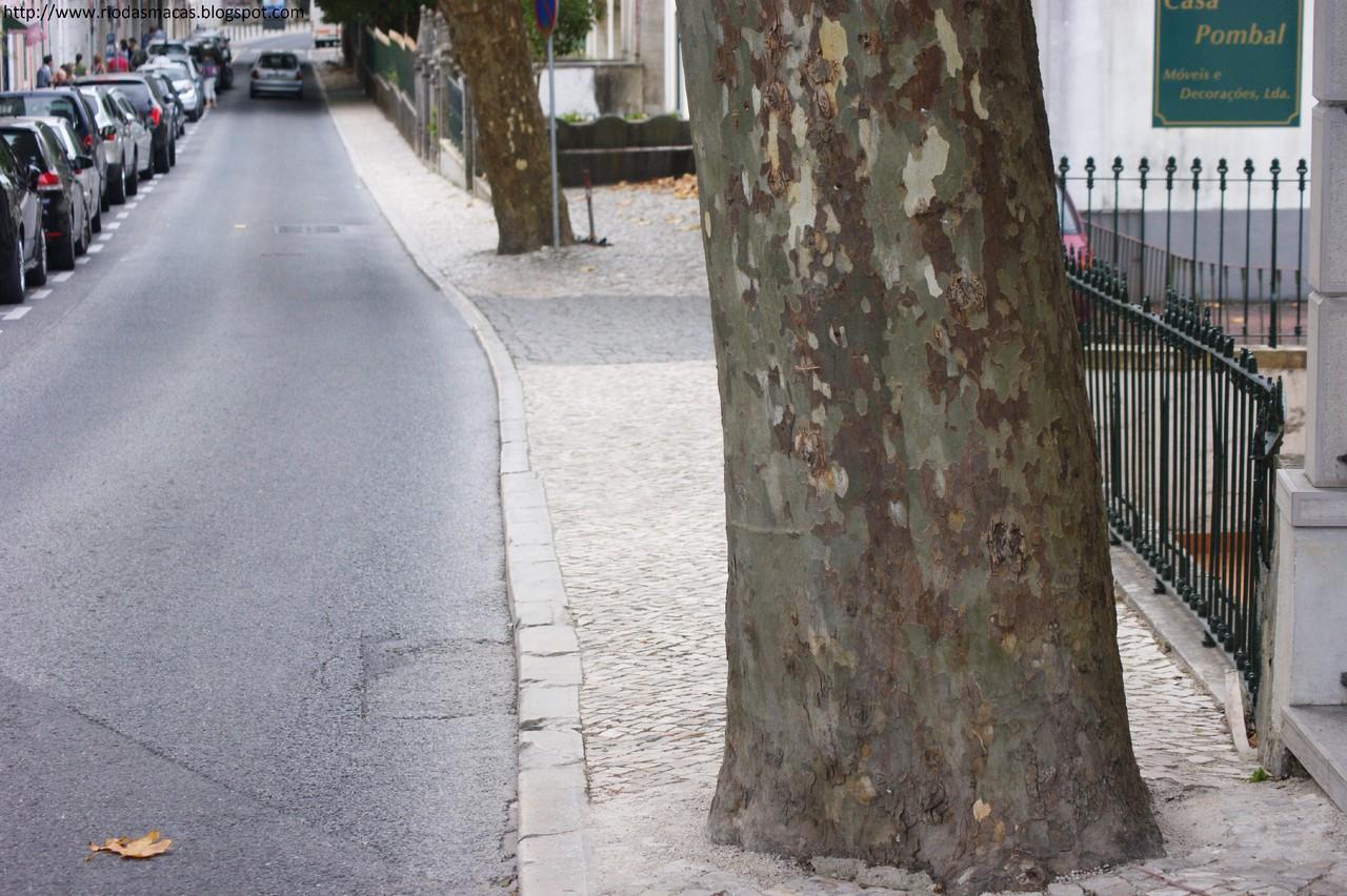 Arvores4102014blog.jpg