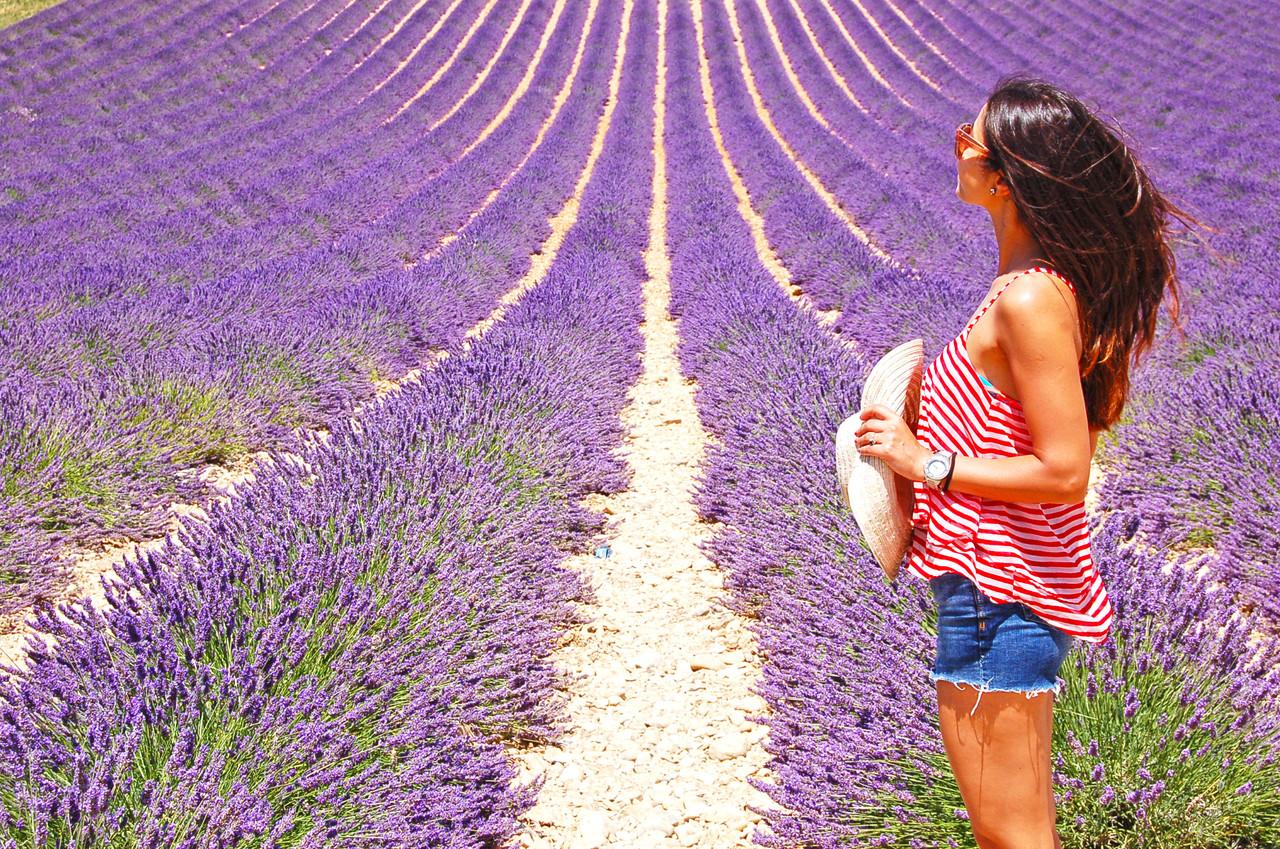 Valensole, Provence. Créditos: Volto JÀ