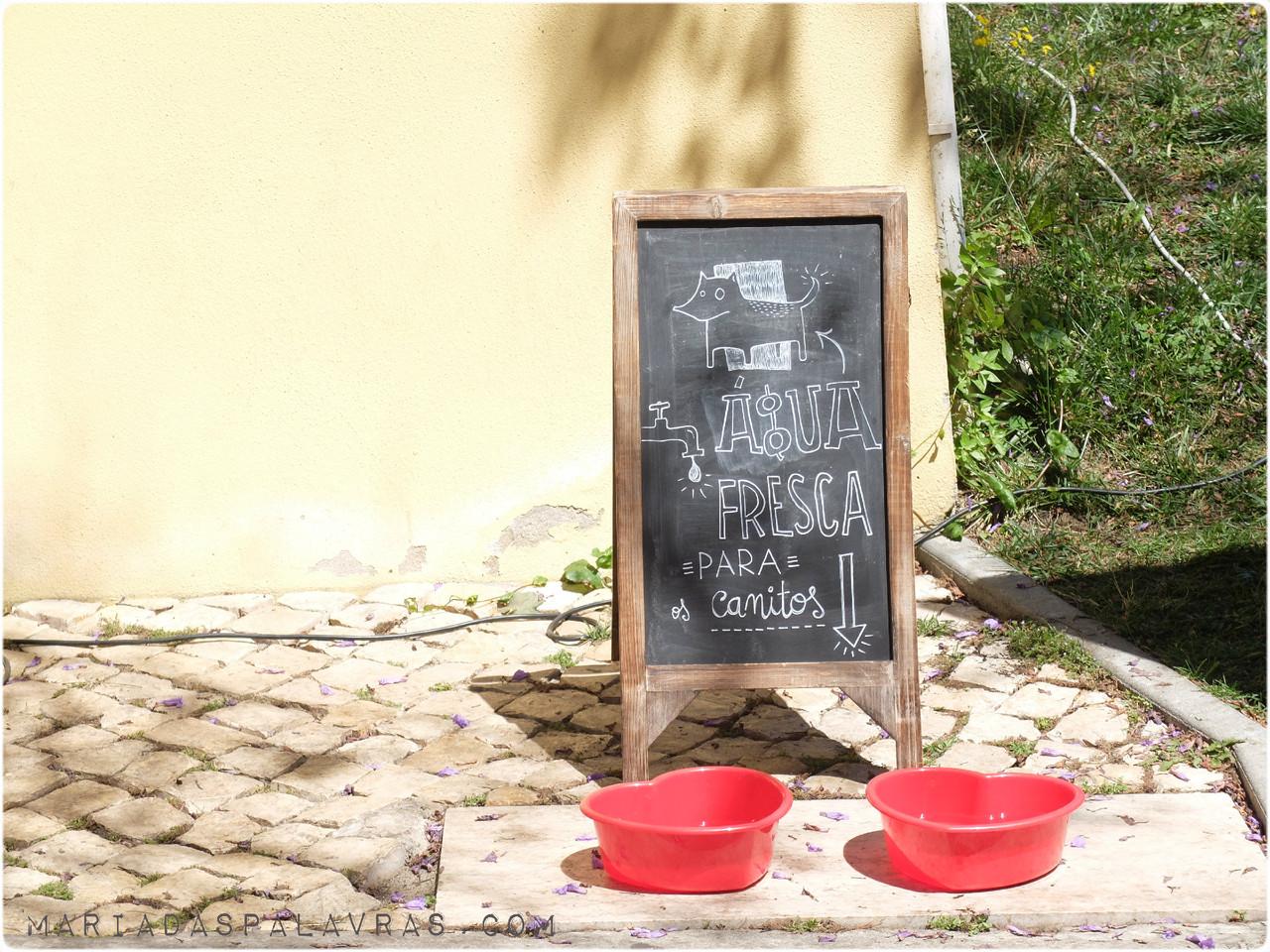 Água para canitos no mercadito do MNHCN  | Foto Maria das Palavras