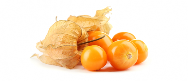 physalis.png