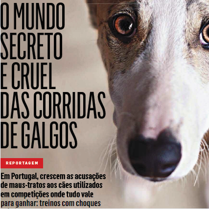 GALGOS.png