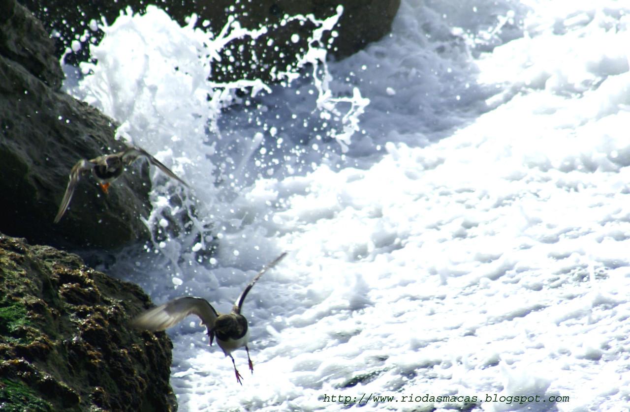 Aves13PM01122014blog.jpg