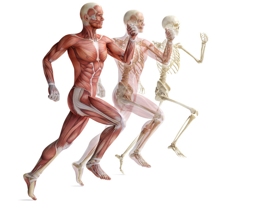 human_body.jpg