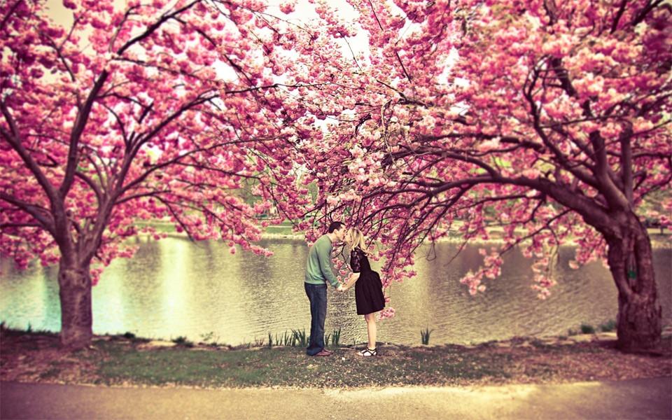 kiss-under-a-cherry-blossom-tree.jpg