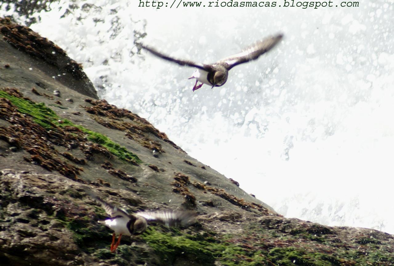 AvesPM01122014blog.jpg