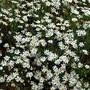 Flores no Parque de Monserrate