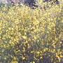 """Foto0437. """"De amarelo as colinas...""""jpg"""