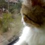 Xuxu de janela..