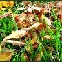 Folhas em manto de ervas