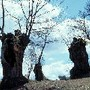 Castanheiros de Trás-os-Montes