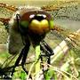 Insecto esquisito.
