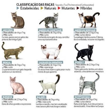 classificacaodosgatos1