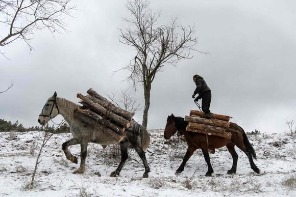 Lenhador nos arredores de Sófia, Bulgária