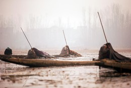 Pescadores no Lago Anchar, Srinagar, Caxemira