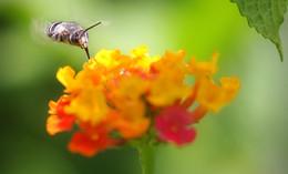 doce nectar