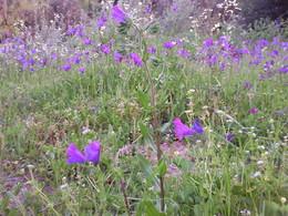 """""""Qual Primavera, esta terra é uma festa!"""" - Soajos floridos - Campos de Aldeia da Mata  - 2014 - FOTO de D.A.P.L."""