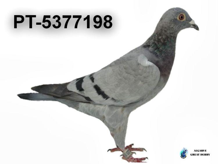 PT-5377198.jpg