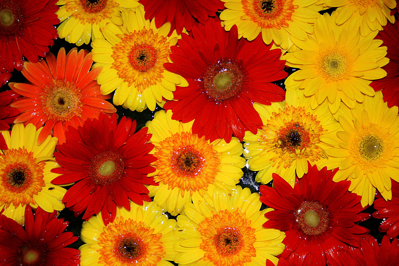 Flores_nagua.jpg