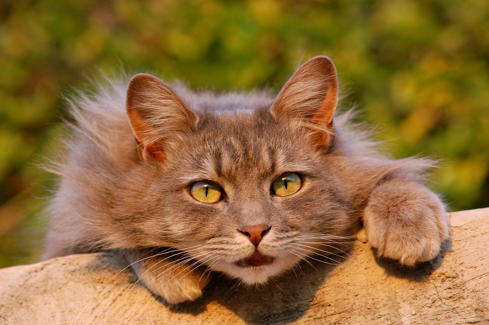 cat-401124_1920.jpg