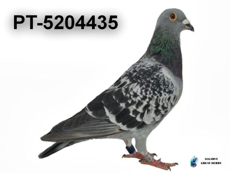 PT-5204435.jpg